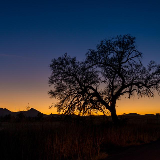 """""""Evening tree silhouette"""" stock image"""