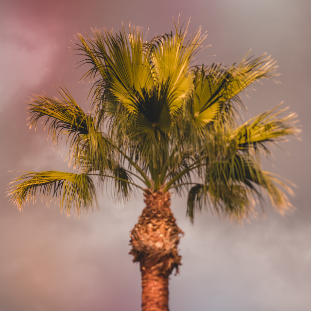 """""""Dreamy blurry image of palm tree"""" stock image"""