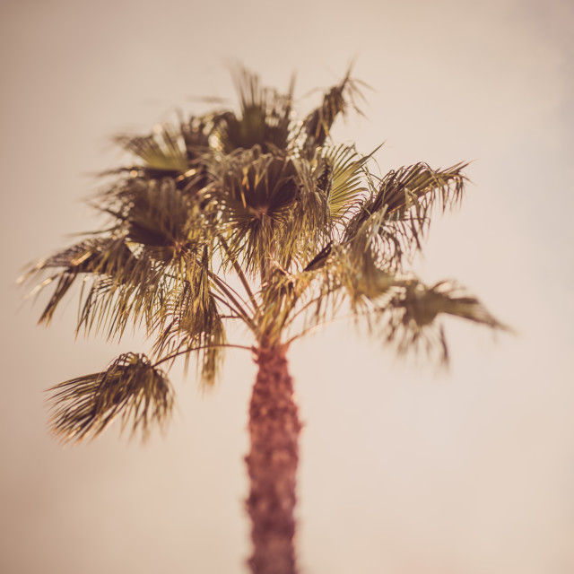 """""""Dreamy blurry image of palm trees"""" stock image"""