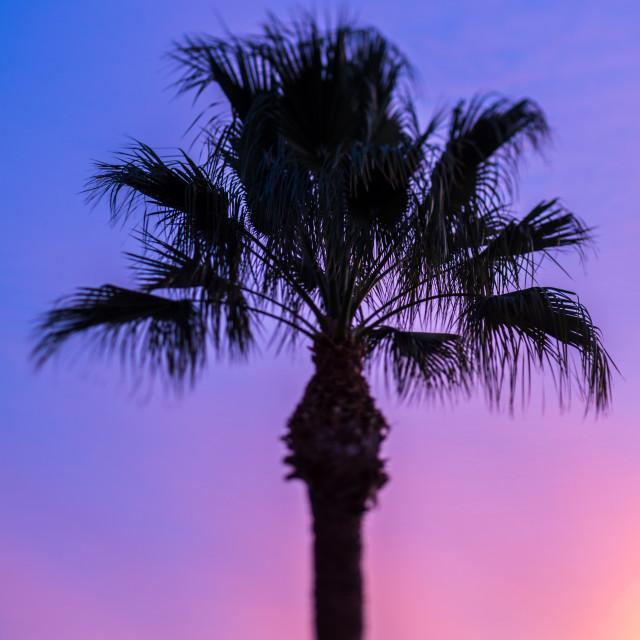 """Silhouette of Palm tree pink sky"" stock image"