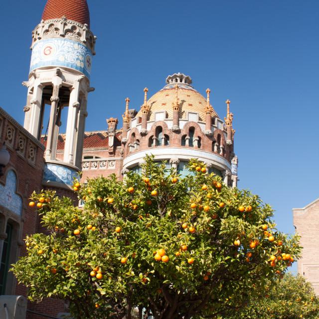 """""""Orange tree in Barcelona"""" stock image"""