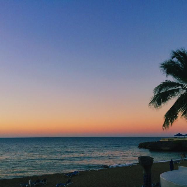 """Palm Tree heaven"" stock image"