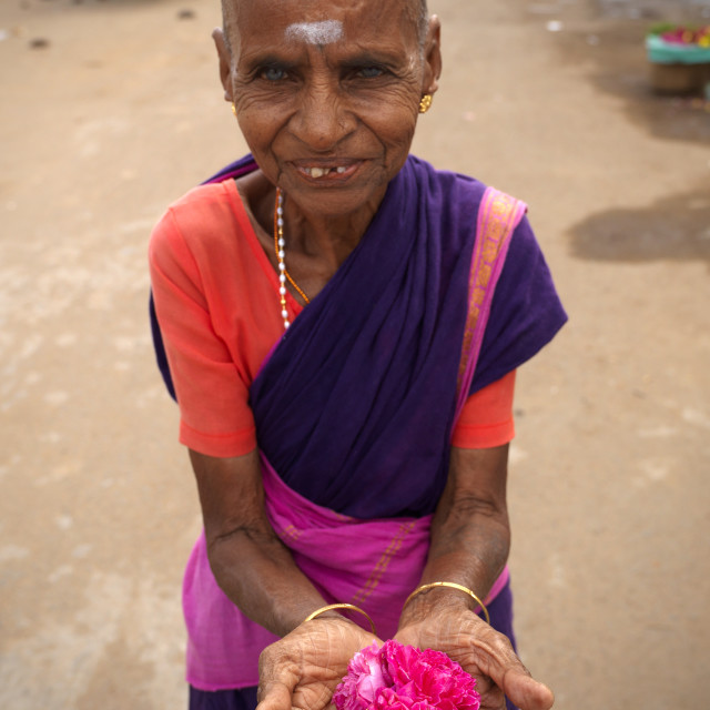 """Old Flowers Seller Holding A Rose In Her Hands Next To A Temple, Kumbakonam,..."" stock image"