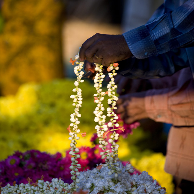 """""""Hand Of A Man Holding Flowers At Mysore Flower Market, India"""" stock image"""
