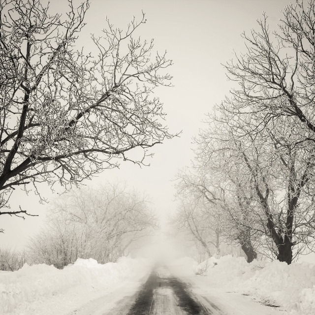 """""""The beauty of the winter"""" stock image"""