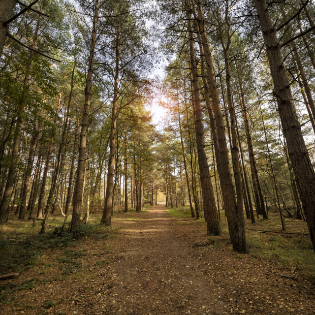 """pathway through the woods with sunlight coming through the trees."" stock image"