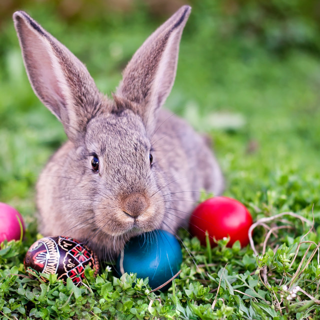 """Easter rabbit and Easter eggs"" stock image"