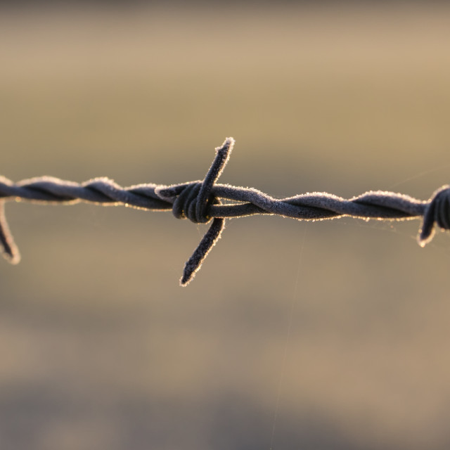 """Frost on Barbed Wire Fence"" stock image"