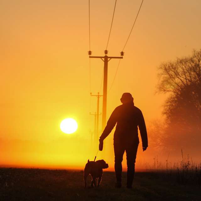 """Attractive Young female walks dog in countryside into the sunset"" stock image"