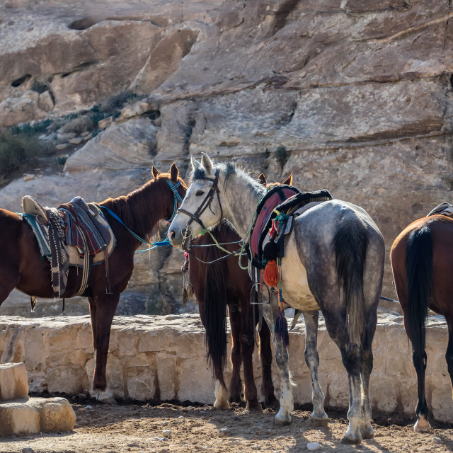 """""""Horses waiting in Petra lost city,"""" stock image"""