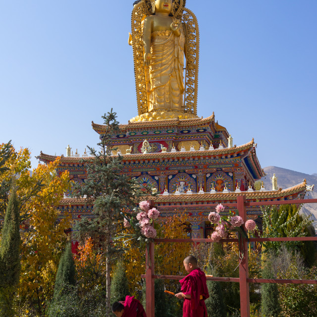 """""""Young monks feeding a dog in front of a golden buddha statue in Wutun si..."""" stock image"""