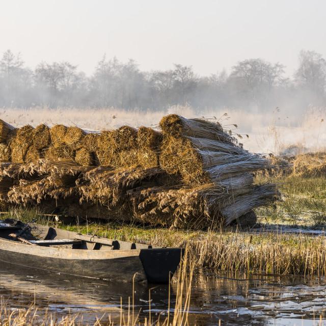 """Cane Boat Smoke Giethoorn"" stock image"