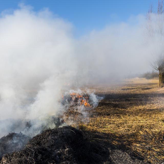 """""""Cane Burning Ash Giethoorn"""" stock image"""