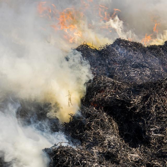 """""""Cane Burning Giethoorn Holland"""" stock image"""
