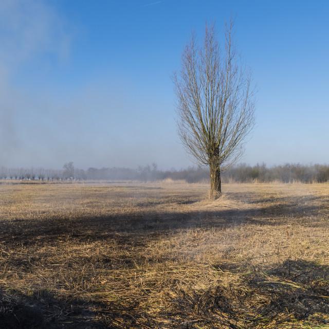 """Cane Burning on Reed Field Giethoorn"" stock image"
