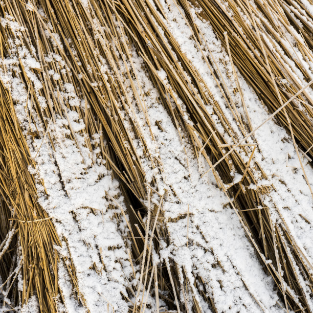 """""""Cane Cultivation Winter Giethoorn Holland"""" stock image"""