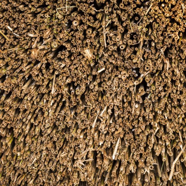 """""""Cane Cultivation in Giethoorn in wintertime in National Park Weerribben-Wieden, Netherlands."""" stock image"""