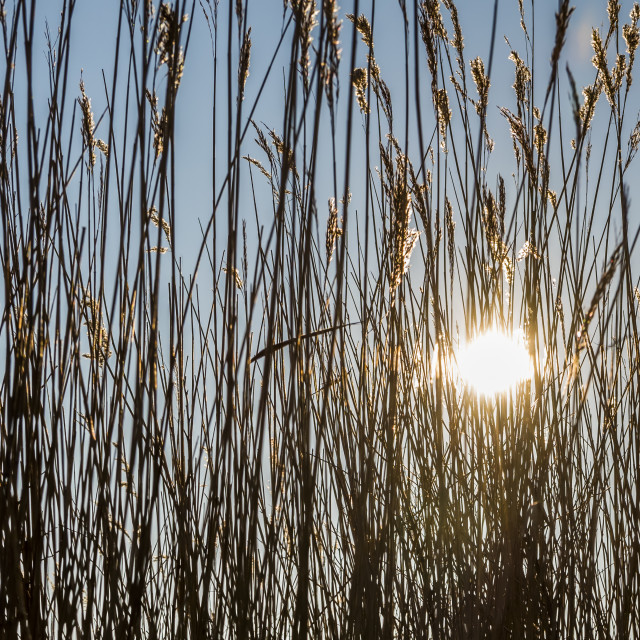 """""""Cane with Sun Giethoorn"""" stock image"""