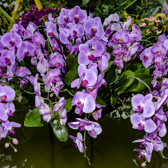 """""""Orchid II"""" stock image"""