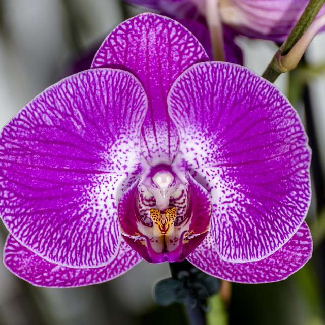 """""""Orchid IV"""" stock image"""