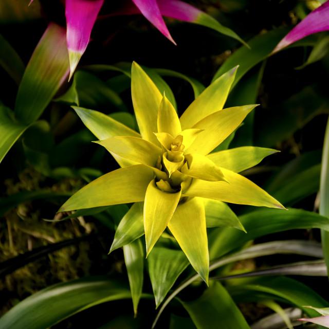 """Pineapple Yellow"" stock image"