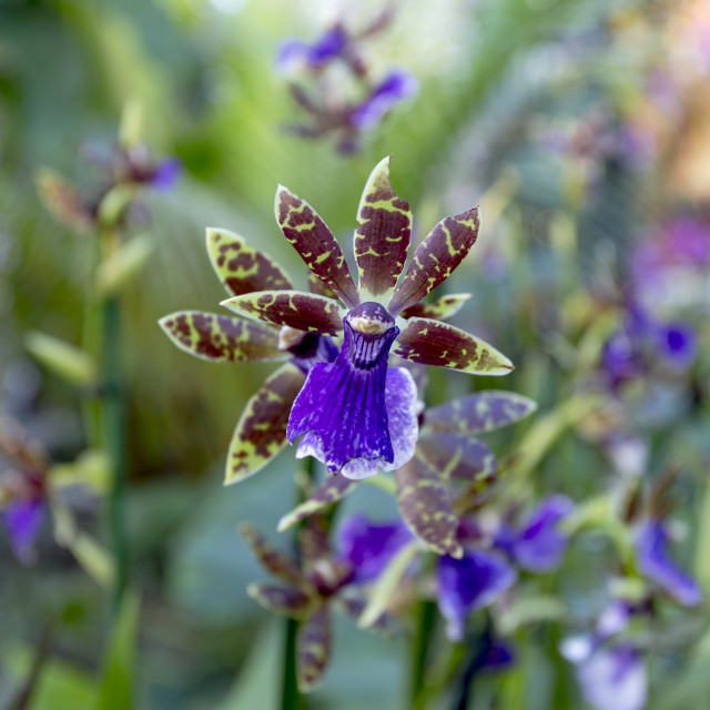 """Orchid IX"" stock image"