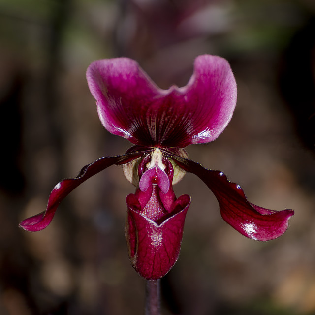 """""""Orchid XIV"""" stock image"""
