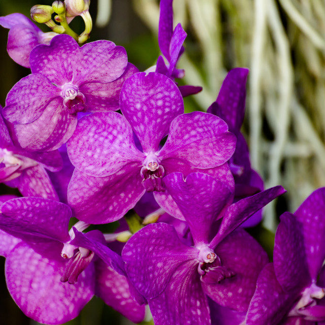 """""""Orchid VIII"""" stock image"""