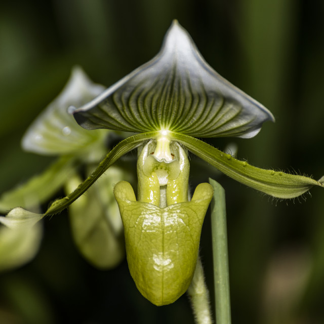 """""""Orchid XIII"""" stock image"""