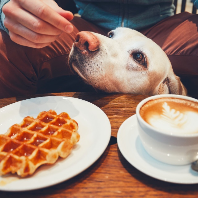 """""""Curious dog in the cafe"""" stock image"""