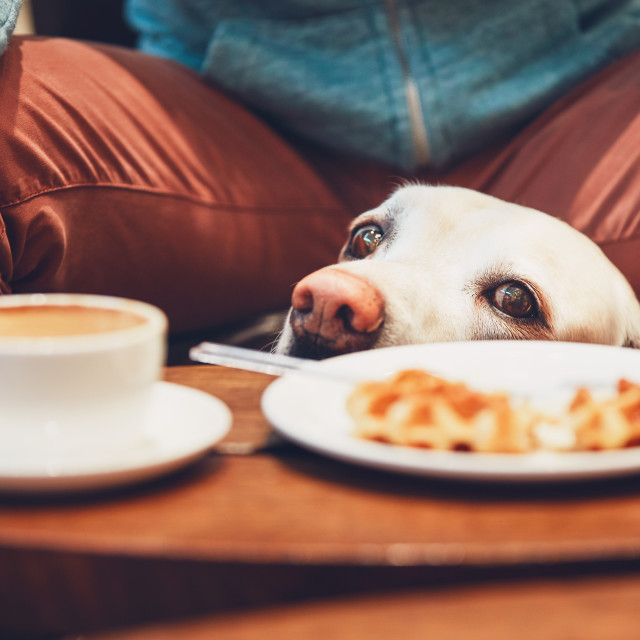 """Curious dog in the cafe"" stock image"
