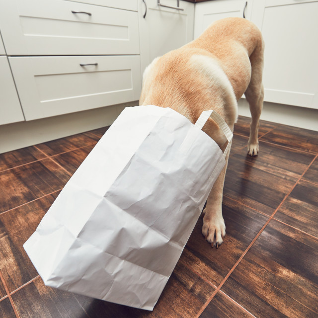 """""""Naughty dog in home kitchen"""" stock image"""
