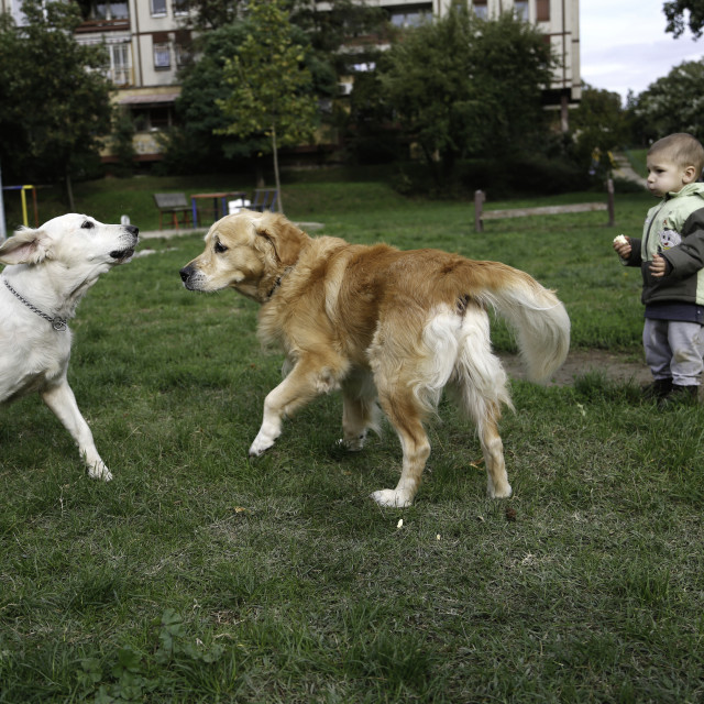 """""""Two years old boy playing with dogs"""" stock image"""
