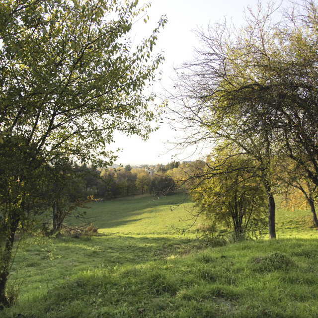 """""""Path beside orchard leads to forest in hills"""" stock image"""