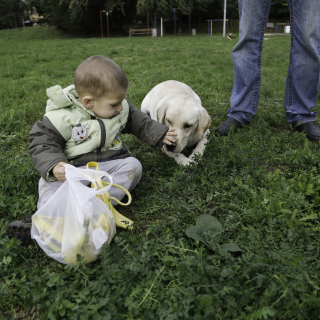 """""""Two years old boy laying on grass and playing with his labrador retriever"""" stock image"""