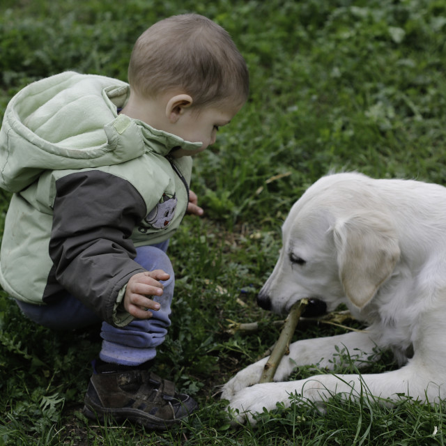"""""""Little boy playing with his labrador retriever"""" stock image"""