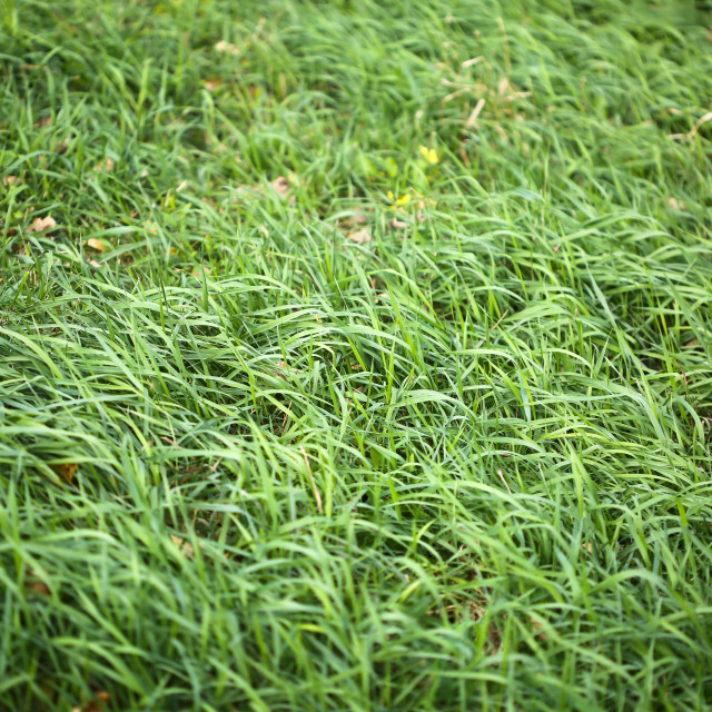 """""""Texture of green grass on windy day"""" stock image"""
