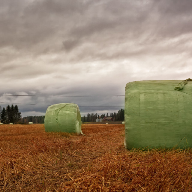 """Hay Bales Wrapped In Plastic On The Autumn Fields"" stock image"