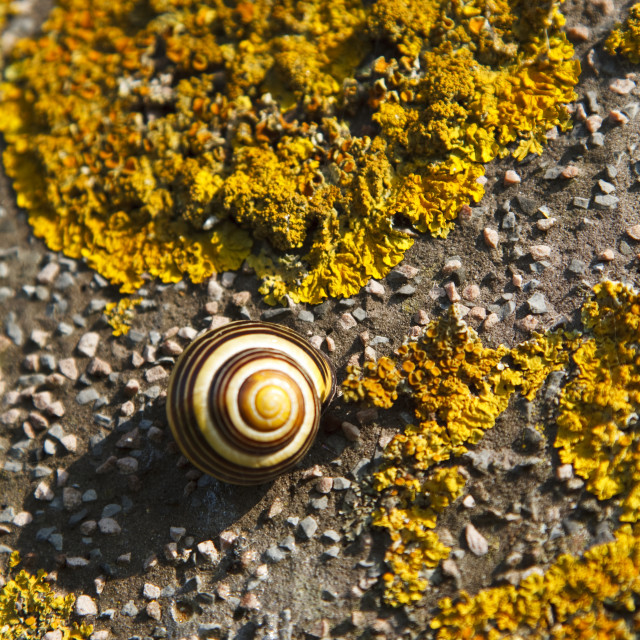 """Sleeping snail"" stock image"