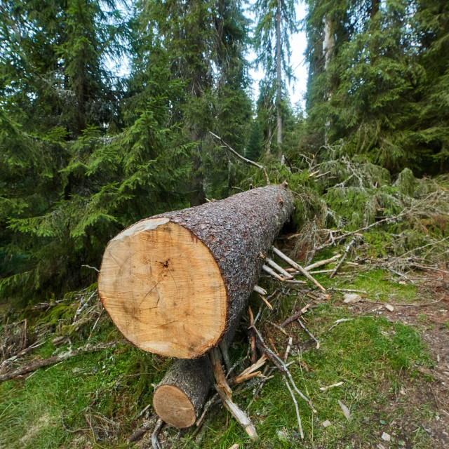 """Deforestation in Romania"" stock image"