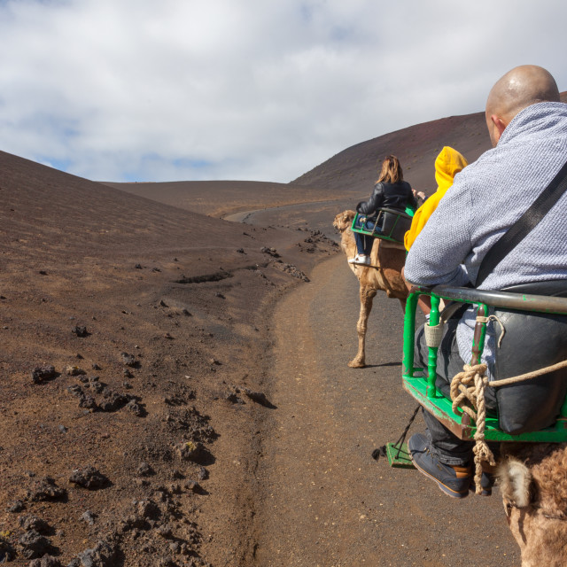 """Camels and camel rides in the Timanfaya national park in Lanzaro"" stock image"