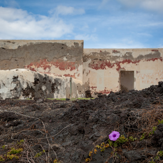"""A purple flower in front of a disused building in El Golfo on La"" stock image"