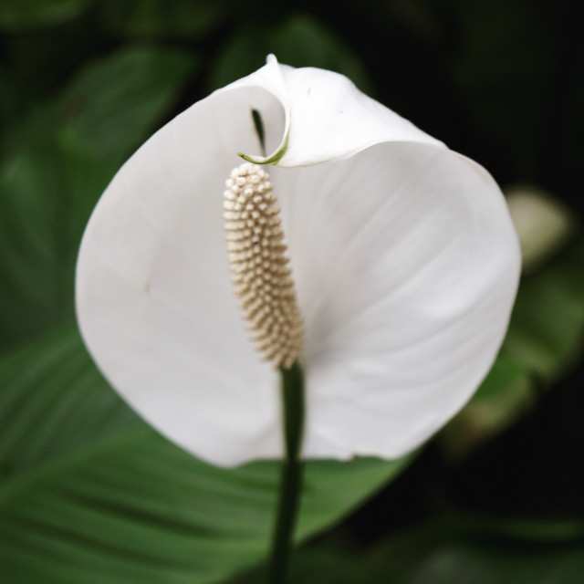 """Beautiful Kew Gardens flower"" stock image"