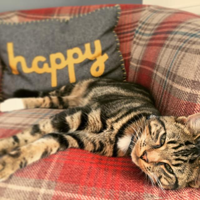 """""""Happy cat"""" stock image"""
