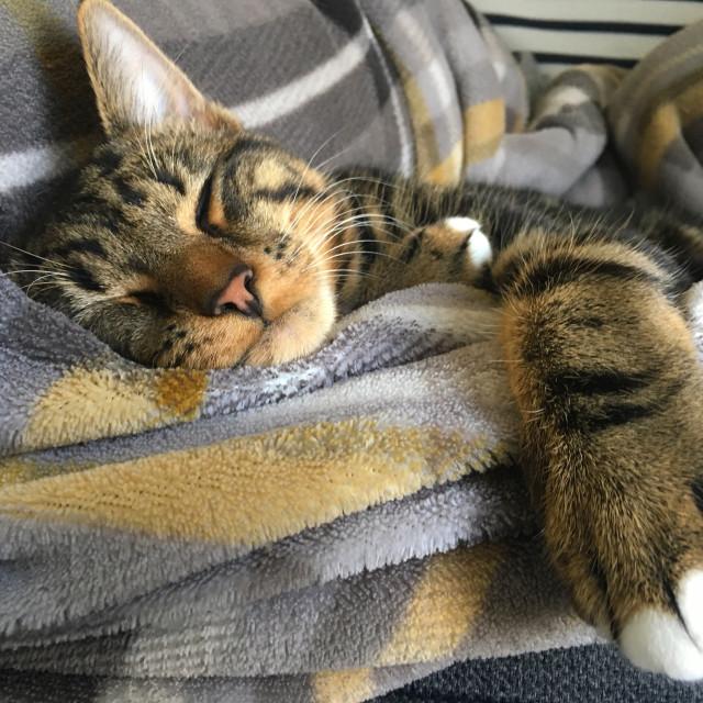 """Cat naps"" stock image"