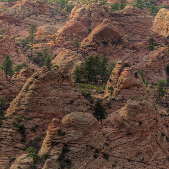 """Zion Kolob Terrace"" stock image"