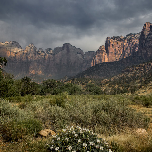"""""""Zion Canyon Summer"""" stock image"""