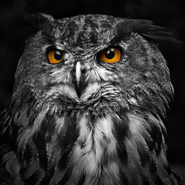 """""""Owl Eyes"""" stock image"""