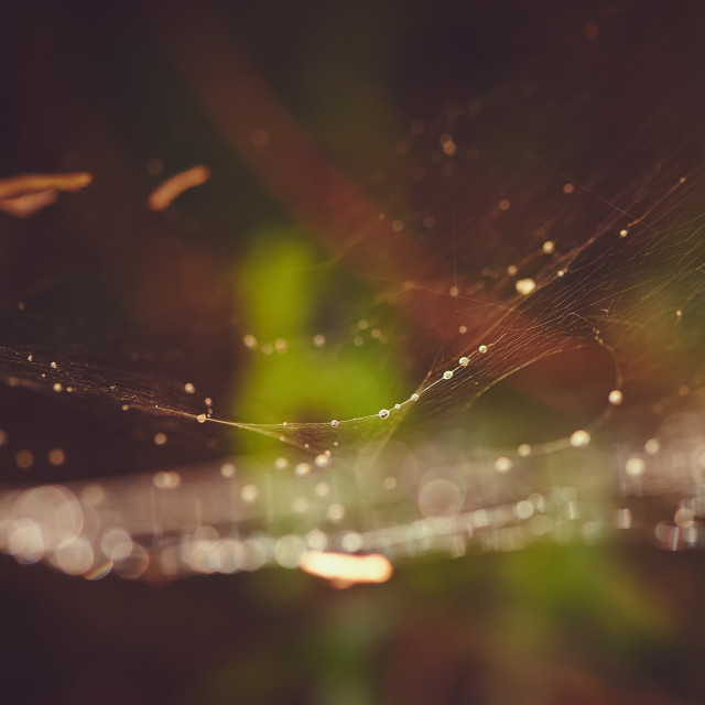 """Spiders web with rain drops"" stock image"