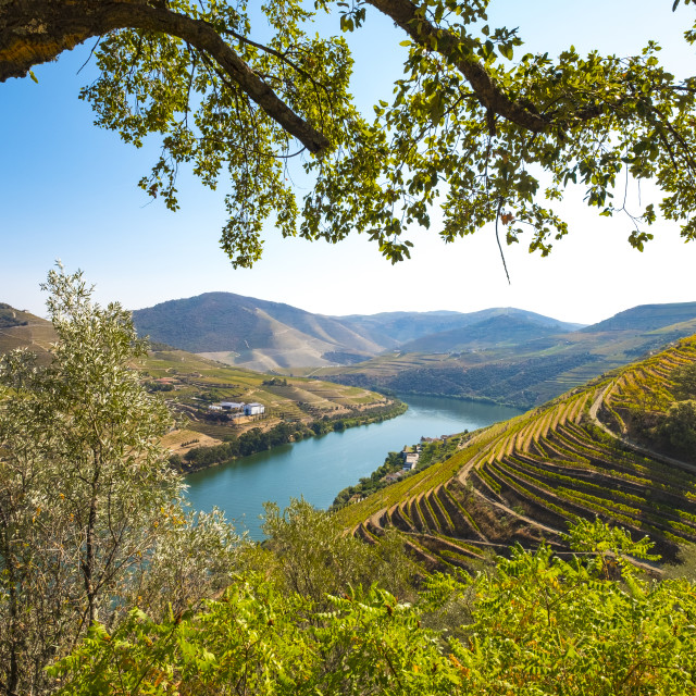 """vineyards and the Douro River, Alto Douro Wine Valley"" stock image"